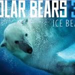 icebear3d